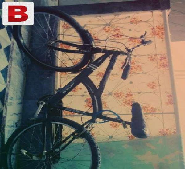 Speedy bicycle oscar