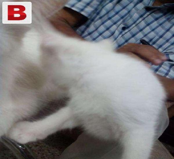 Cats on adoption