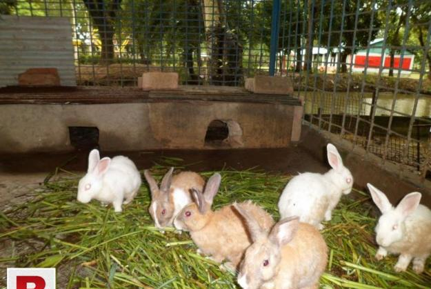 Rabbits and babies for sale