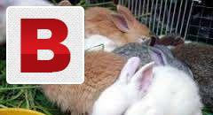 Rabbits kids healthy