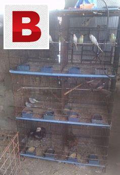 8 portion folding master cage for sale