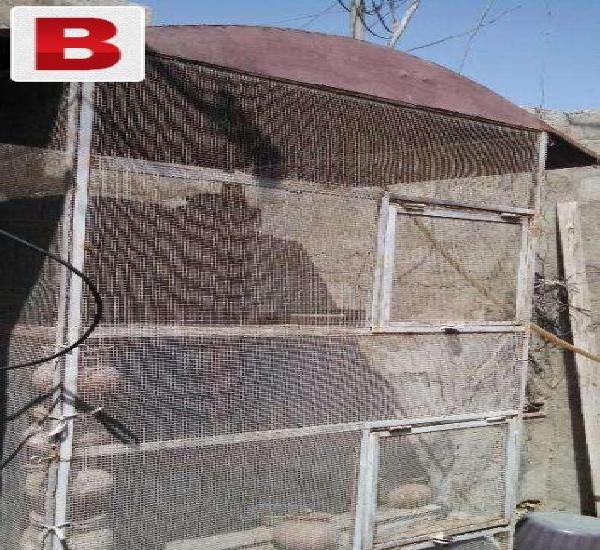 Birds cage is available