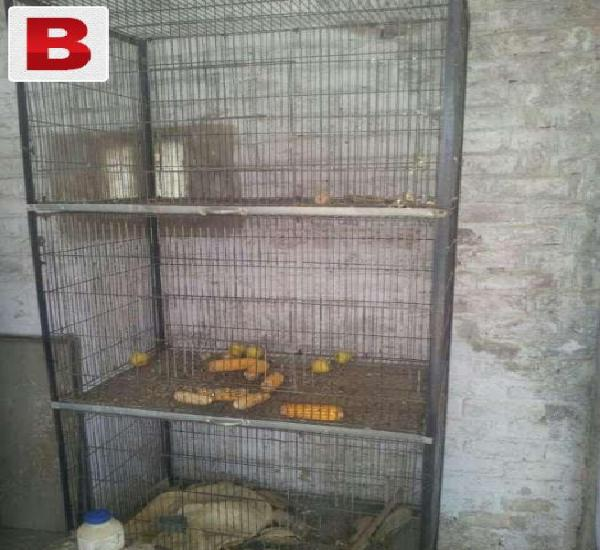 Birds spot velding cages