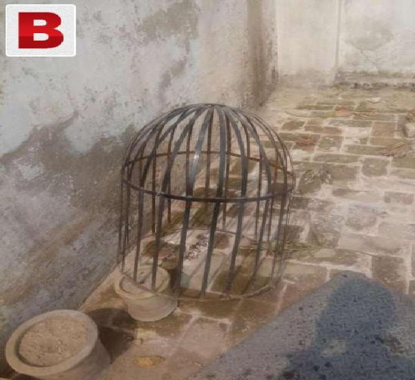 Cage for kolangi murgh in gulbahar.