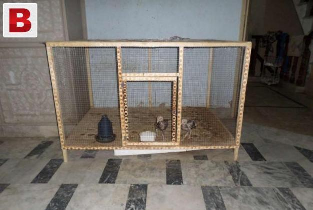 Chickens bird's big size cage