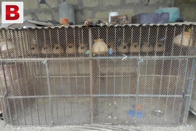 Dog order made two portion iron grill cage !