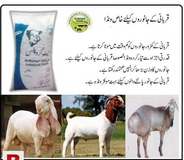 Feed wanda for qurbani animals sheep goat bull