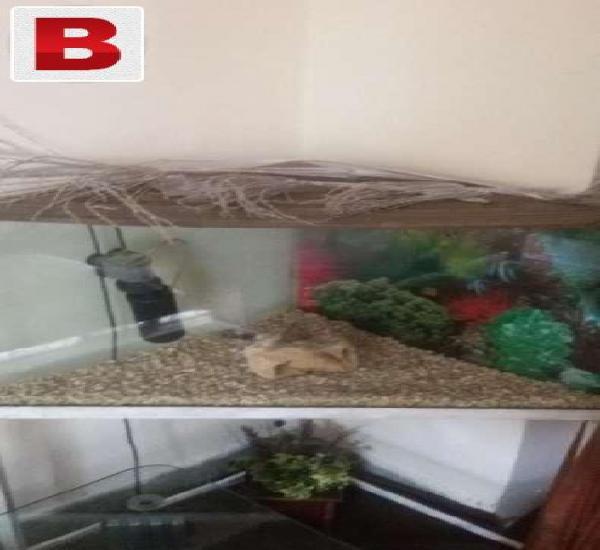 Fish aquarium in isb