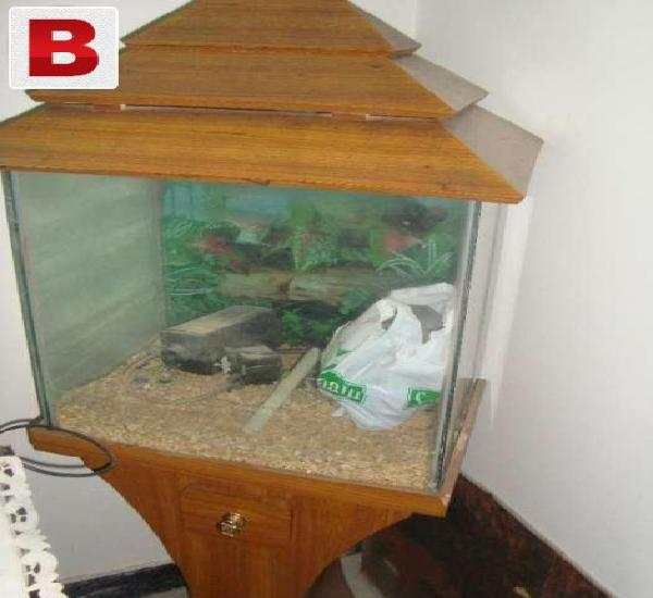 Fish aquarium medium size