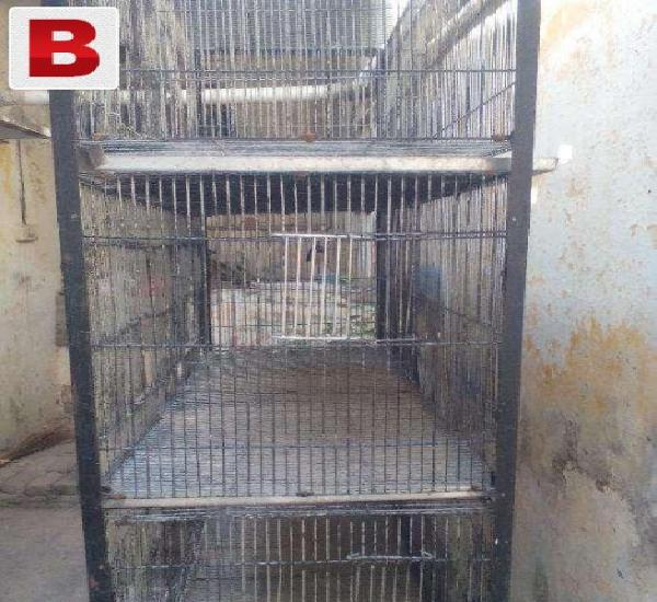Folding cage galavanized wire good