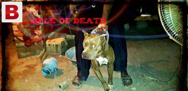 Happy news for pitbull lover all around world