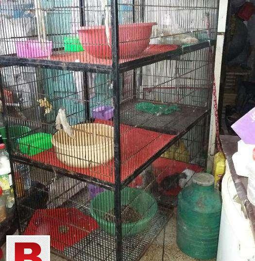 Solid cage available