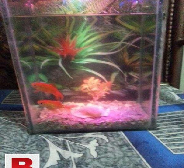 Excellent equarium urgent for sale very cheap price