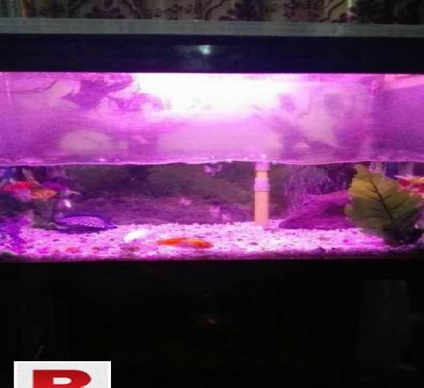 Fish aquarium very beautiful.read full add.