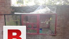 Iron pipe cage 5*3*2 ideal for colonies (3 partitions can be