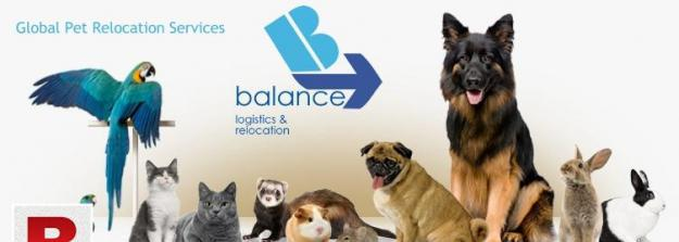 Local and international pet moving services
