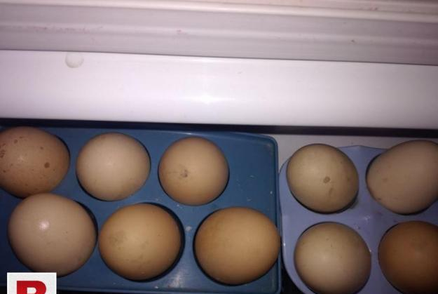 Pure aseel mianwali eggs available