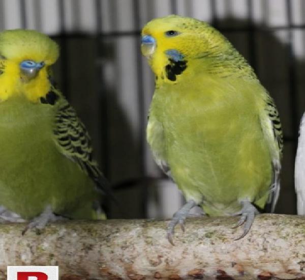 Exhibitions breeders