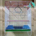 Fine quality fancy new cage size small by petno1.pk, lahore