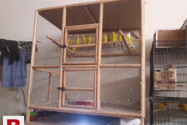 Wooden cage for budgies birds
