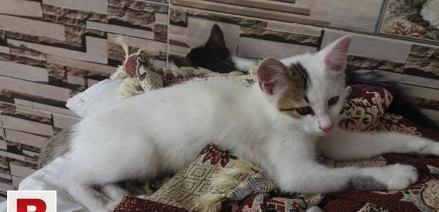 Kitten couple looking for new home
