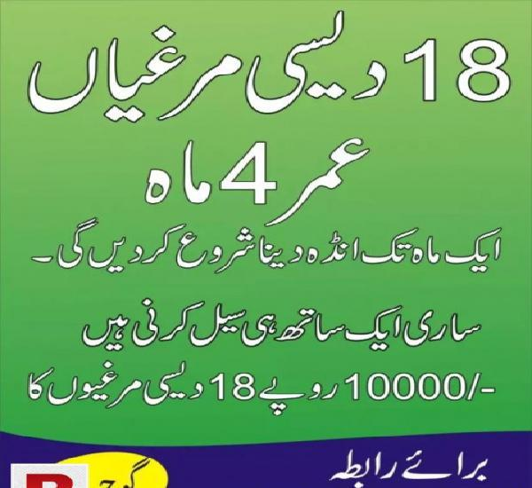DESI HEN 18 in GUJAR KHAN RS. 10000/-