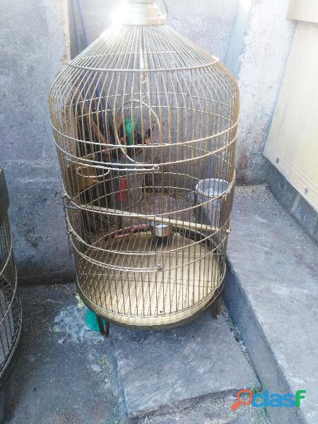 BIRDS CAGE AVAILABLE 1