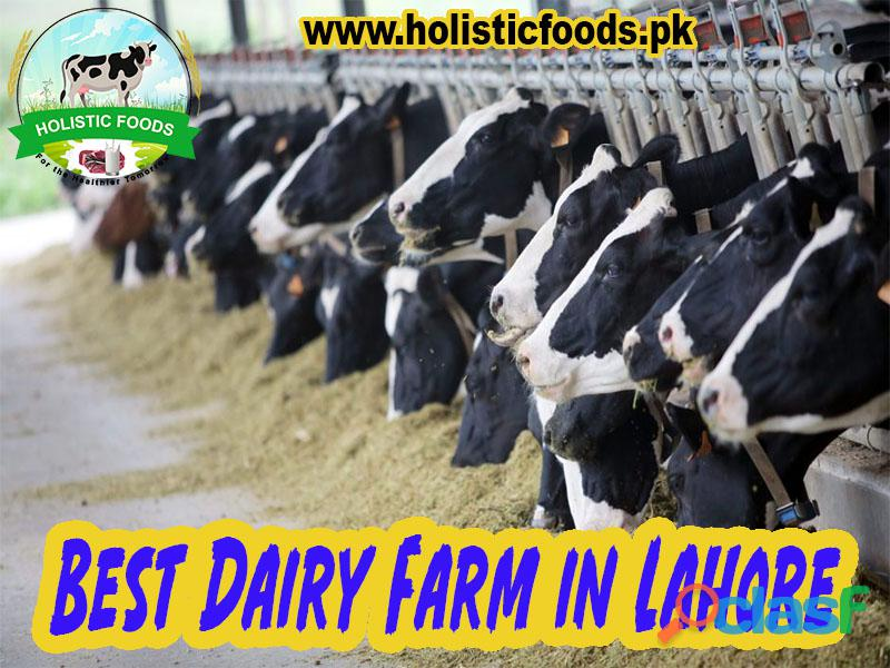 Best dairy farm in lahore | big dairy farms