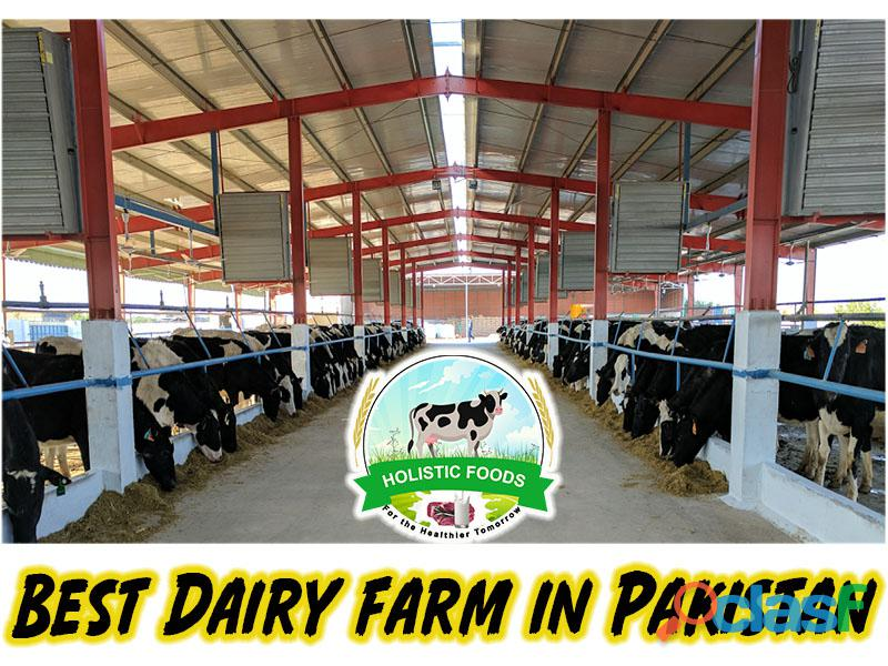 Best dairy farm in pakistan | cattle farm