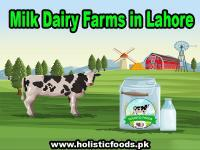 Milk dairy farms in lahore | milk farming