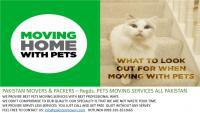 Home moving with pets you love your pets we too, karachi