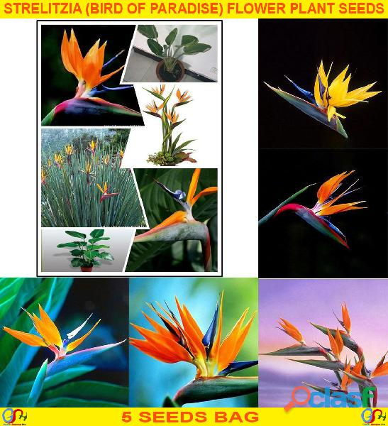 Pakistan Best all kinds of Plants Hybrids Seeds Online Market 1