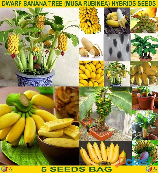 Pakistan Best all kinds of Plants Hybrids Seeds Online Market 2