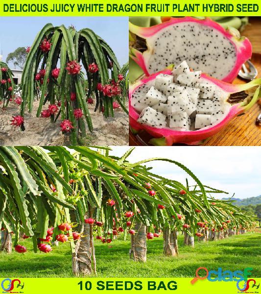 Pakistan Best all kinds of Plants Hybrids Seeds Online Market 3