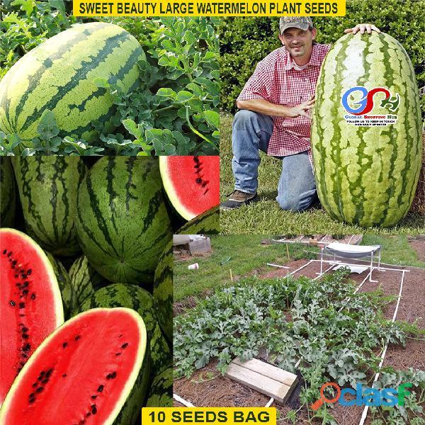 Pakistan Best all kinds of Plants Hybrids Seeds Online Market 4