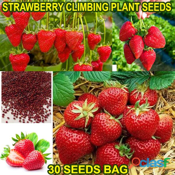Pakistan Best all kinds of Plants Hybrids Seeds Online Market 5