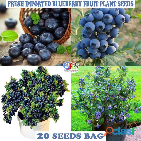Pakistan Best all kinds of Plants Hybrids Seeds Online Market 6