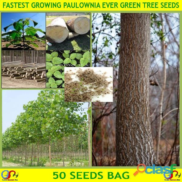 Pakistan Best all kinds of Plants Hybrids Seeds Online Market 8