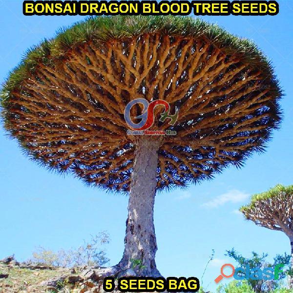 Pakistan Best all kinds of Plants Hybrids Seeds Online Market 9