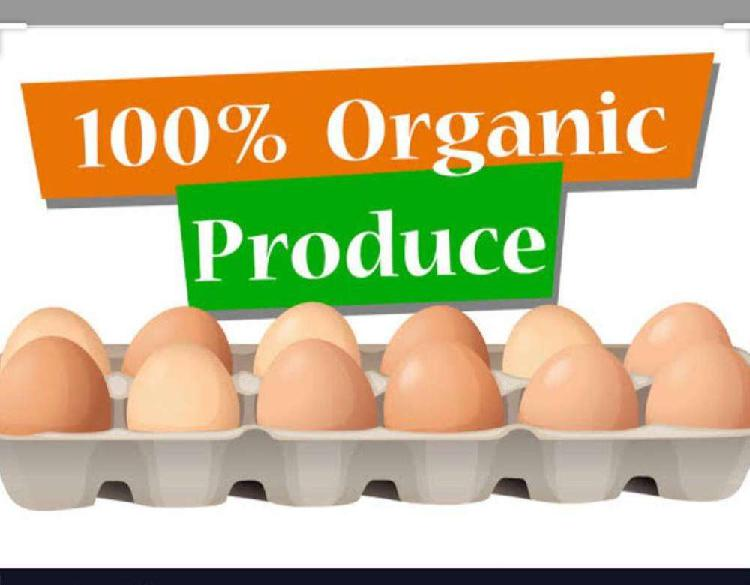 Organic eggs(desi anday)#natural chicken #meat