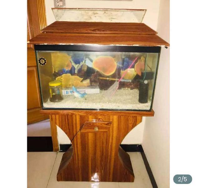 3ft fish aquarium with 8mm glass.